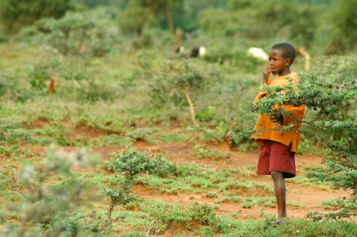A boy herding the cattle at the foot of Ngong Hills after a week of rains.