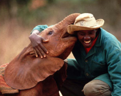 David Sheldrick Wildlife Trust takes care of baby elephants and rhinos